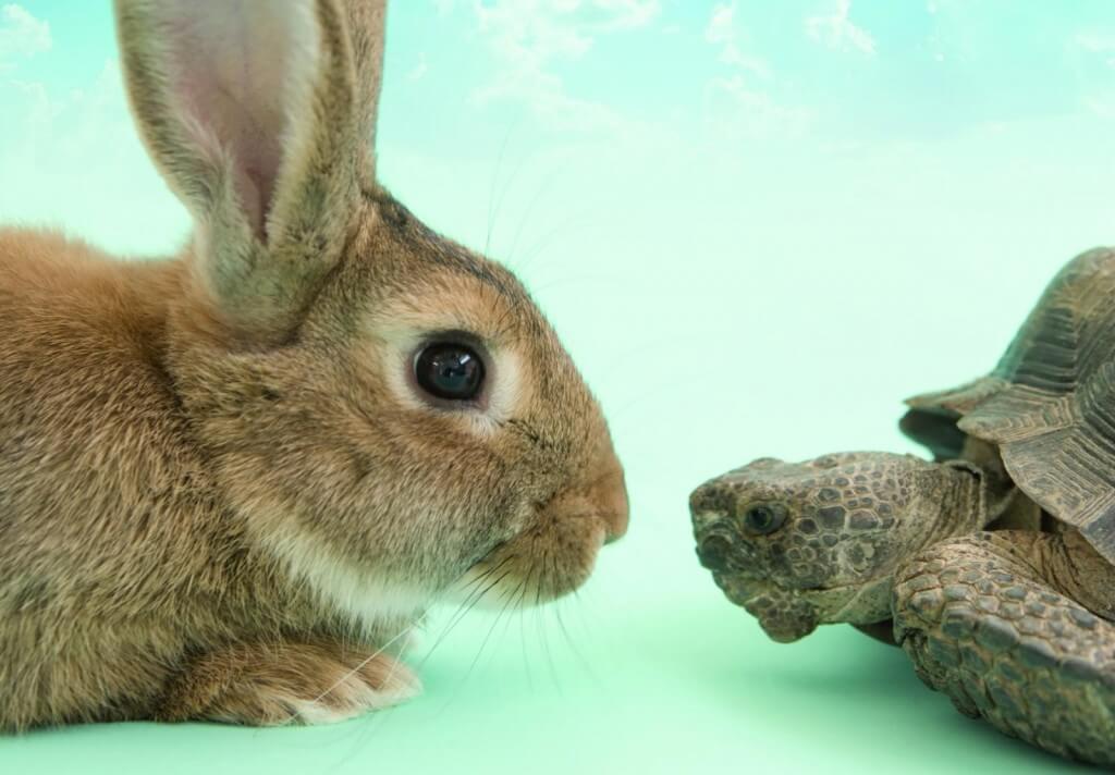 摄理新闻_乌龟与兔子对视