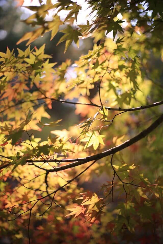 摄理月明洞_入秋季节红叶