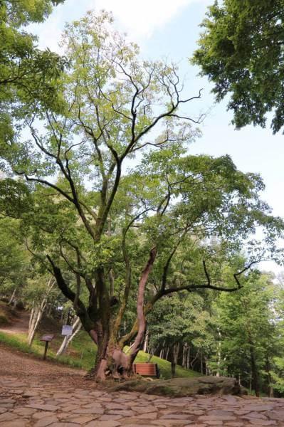 干旱月明洞下雨_松树