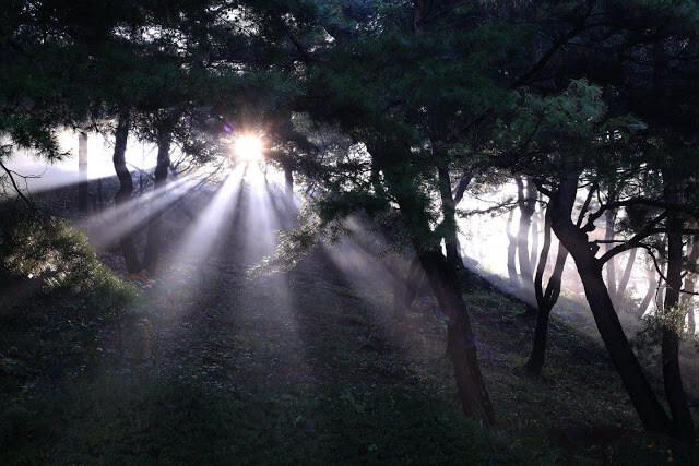 摄理Joshua Jung秋日音乐会_月明洞阳光