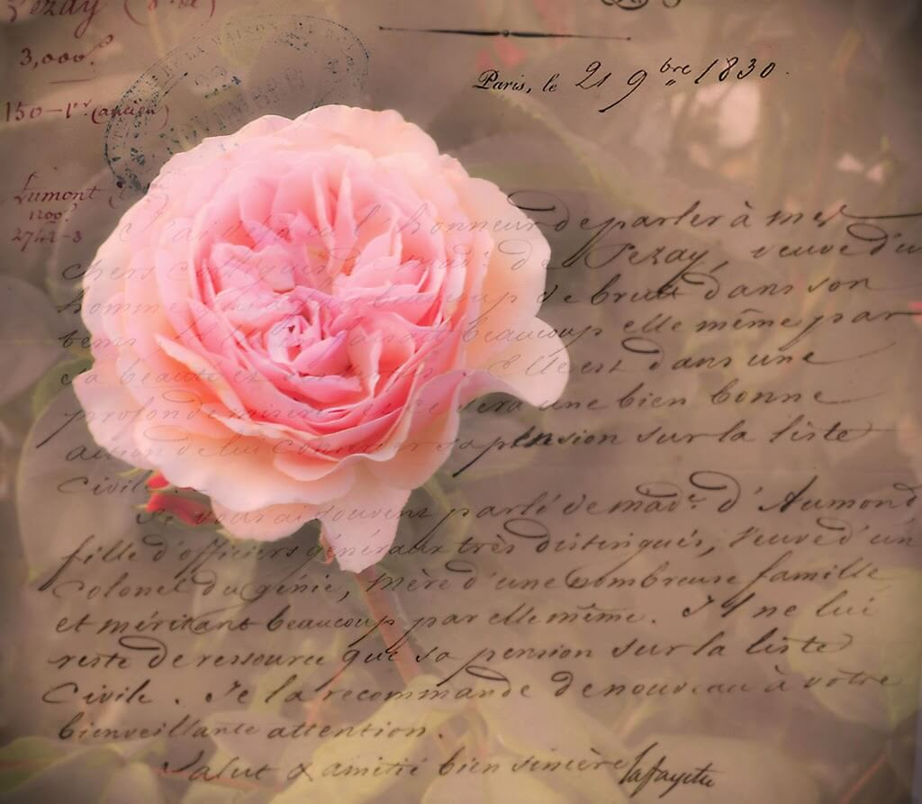 摄理新闻_相通的秘密_美丽花朵