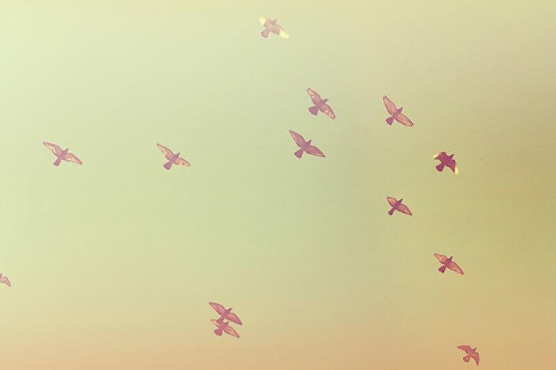 摄理新闻_祷告成就_一群鸟