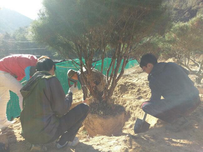 攝理月明洞_移植松树方法_步骤一