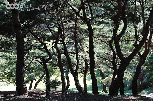 摄理月明洞_松树步道