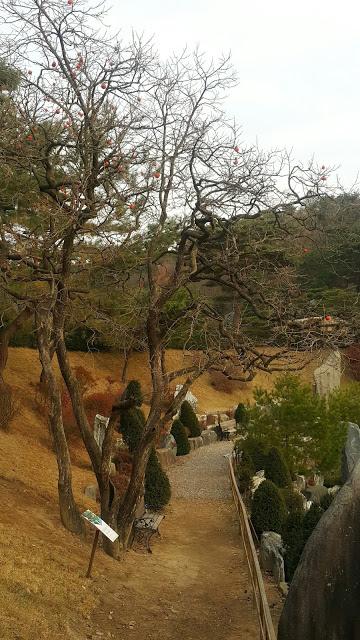 摄理月明洞_月明湖边柿子树