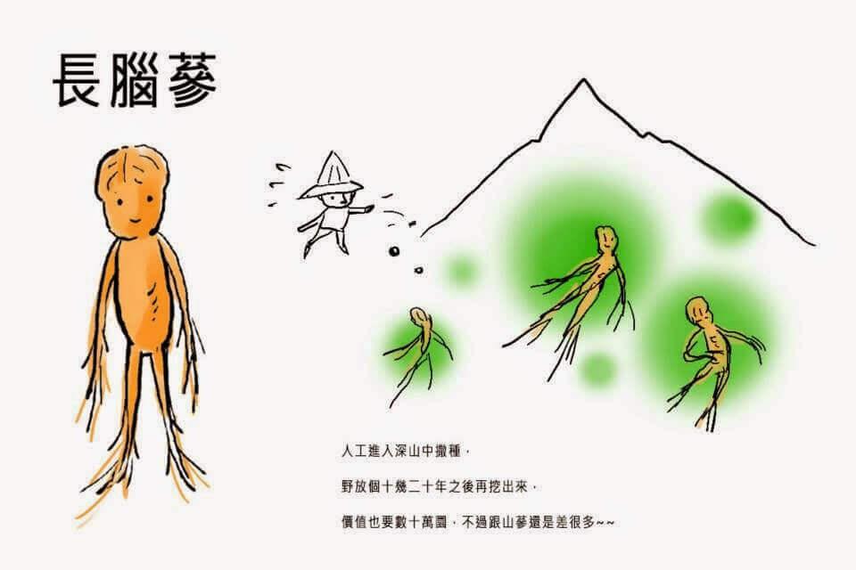 摄理漫画_人参的故事_长脑参